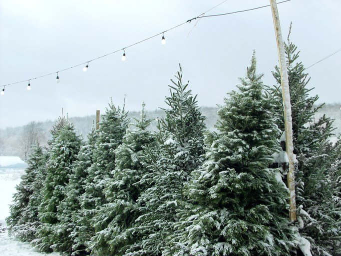 COLUMBUS, Ohio (AP) - An anonymous donor has given people who couldn't  afford a Christmas tree a chance to take one home after paying for all the  remaining ... - Christmas Trees For Free After Ohio Donor Buys The Lot - WFMJ.com