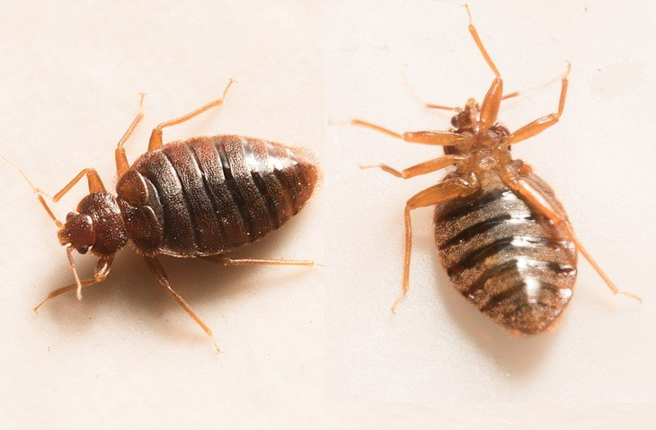 Youngstown Health Department Fielding Bed Bug Complaints Wfmj Com