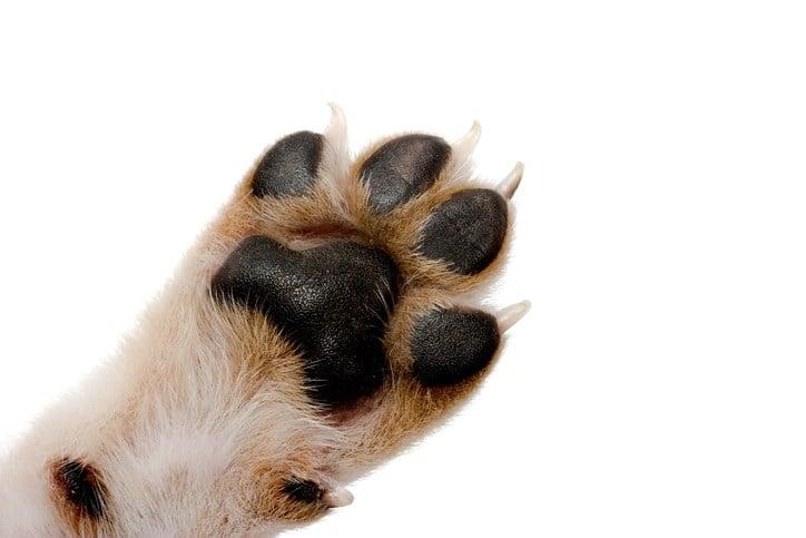 ohio dog laws 2017