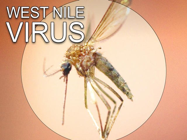 Human case of West Nile found