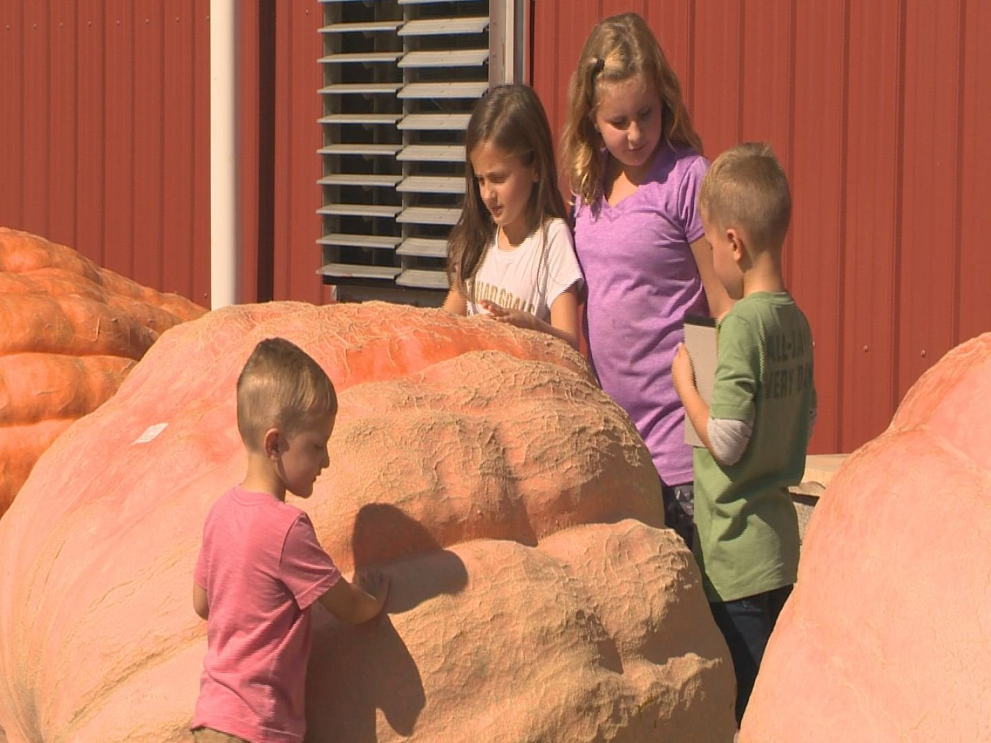 Pumpkin weigh off in canfield is world record setting event news weather sports for for Parks garden center canfield ohio