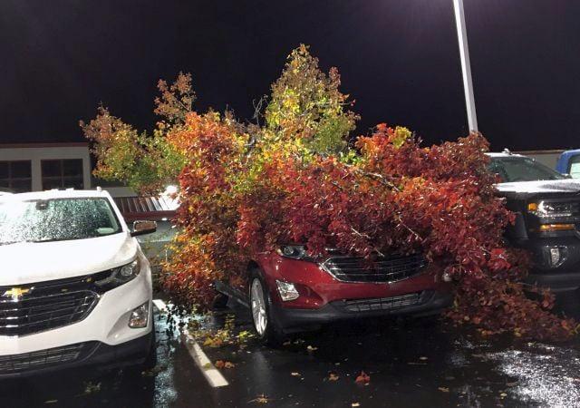 Tree damage in Boardman