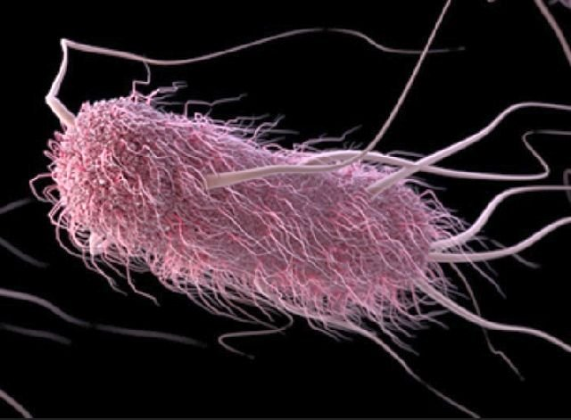 Coli Outbreak Hits 7 States, Source Is Unknown