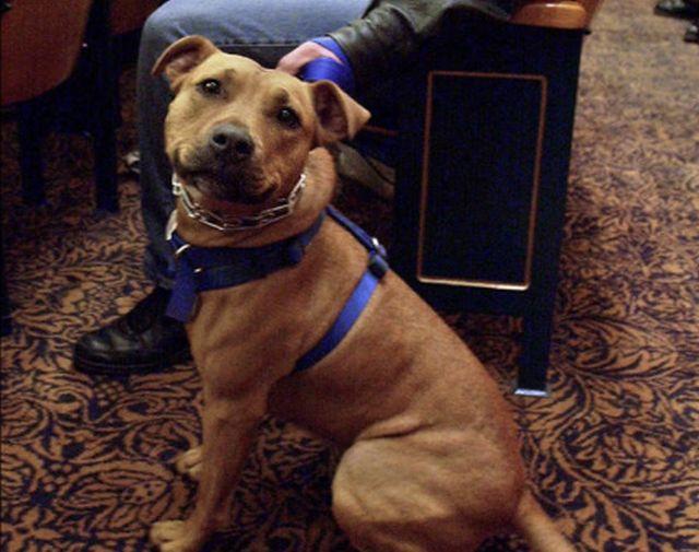 Dog Rescue Groups In Columbus Ohio