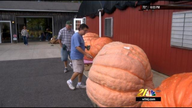 Winning Pumpkin In Canfield Contest Weighs 1 760 Pounds News Weather Sports For