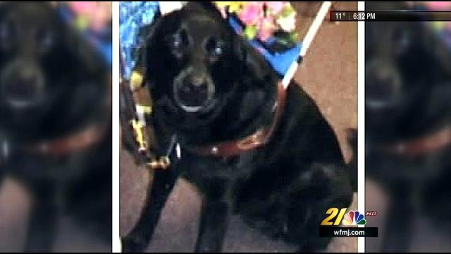 Family still searching for missing guide dog - WFMJ com News