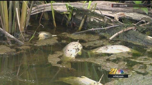 Sewage in lake newport contributed to fish kill in mill for Fishing lakes in ohio